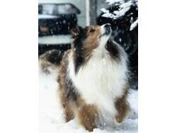 犬との暮し、寒い時期に気をつけたいこと