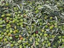 オリーブオイルの特徴と使い方