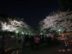 江戸情緒を味わう!東京・梅と桜のライトアップ