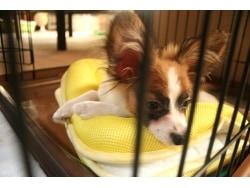 排泄の春!犬の目の下の涙、茶色い筋や汚れのケア方法