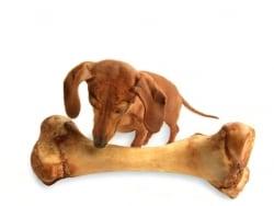 愛犬の肥満に注意! 太り過ぎの犬が増えている?