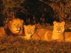 夜の動物たちに感激! ナイトサファリへ行こう