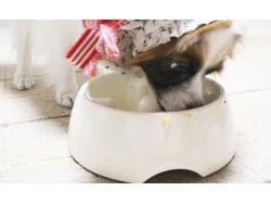 美味しい犬ごはんは?犬の食欲に影響するポイント4