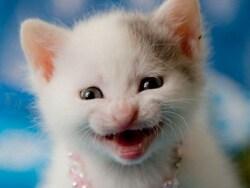 なんか企んでそうな顔の猫