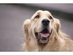 改めて考えておきたい「愛犬の防災」