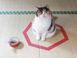 """話題の""""猫転送装置""""を実際に作ってみた"""