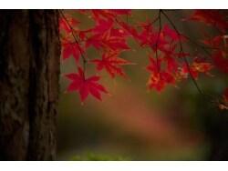 紅葉も背景が大事? 人と差を付ける紅葉撮影のコツ