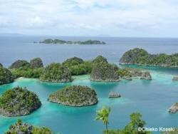 バリの次はここ!インドネシアの楽園ラジャアンパット