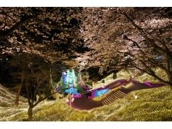 西武園ゆうえんち「イルミージュ」千本桜と光のショー