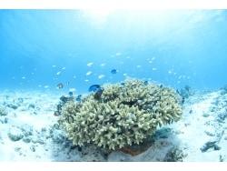 サンゴの生態系と腸内細菌の意外な共通点とは