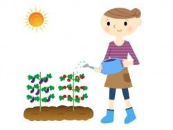 作物の種類が増える家庭菜園中・上級者向けの害虫対策