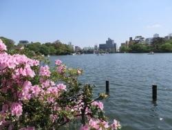 洗足池、桜に史跡が点在する静かな住宅街