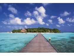 海外旅行保険は「ネット通販」が手軽でお得!な理由