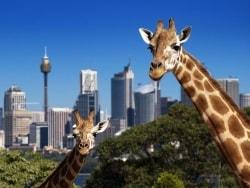 空き時間にぴったり!シドニーのテーマパーク