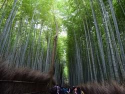 京都 嵐山・嵯峨野散歩 「竹林の道」周辺の名所を歩く