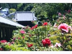 花と物語に彩られた古刹 奈良大和路の長谷寺を歩く
