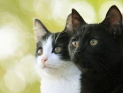 監督と主演猫に聞く映画「猫よん。」の魅力
