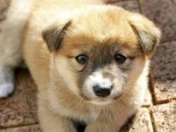子犬の将来を分ける「生後8週齢」規制に大きな動き