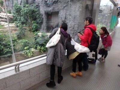 「まさに好きなだけパンダを見放題!」
