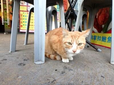 椅子の下にいたのは猫だった