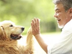 気になる犬種ごとに見られがちな病気や平均余命