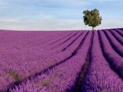夏旅におすすめ! フランスの美しい街めぐり