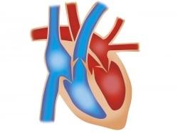 専門医が解説! 関根勤さんの冠動脈狭窄症と心臓手術