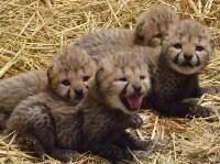 ベビーもいっぱい! GWの多摩動物公園