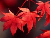 韓国語で紅葉を愛でましょう!