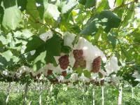 山梨でぶどう狩りと絶品ワインに癒される