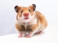 ネズミくんに来ないで頂く最初の一手