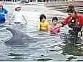 日間賀島でイルカとふれあい体験