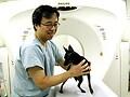 「動物高度医療診断ラボ」って何?