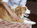 愛犬の健康と互いの絆に『プレイズタッチ』