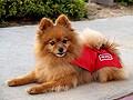 雷恐怖症で悩む愛犬達に耳寄り情報!