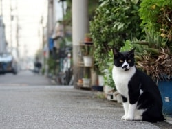 猫が来ない庭、猫の糞尿対策