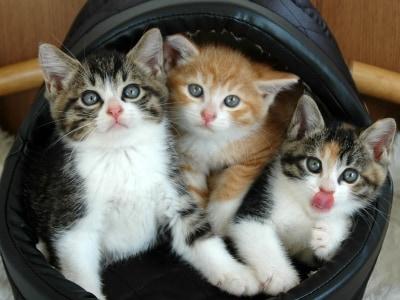 左から、キジ白、茶白、シマ三毛兄弟