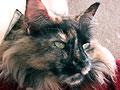 ネコの性と不妊手術 ネコの不妊手術の勧め