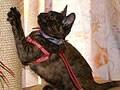 1泊以上家を空ける時、猫をどうしましょう