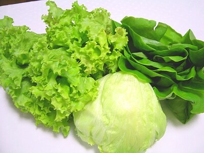 左からグリーンレタス、結球レタス、サラダ菜です。同じレタスでも、見た目が全然違いますね