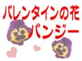 バレンタインの花パンジー