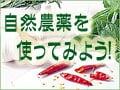 自然農薬を使ってみよう!