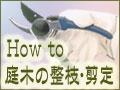庭木の整枝・剪定の仕方【How to 基礎編】