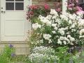 Vol.4春の草花で花壇や寄せ植え作りを
