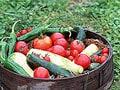 Vol.5野菜やハーブを育ててみよう