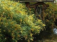 京都の春の花の名所