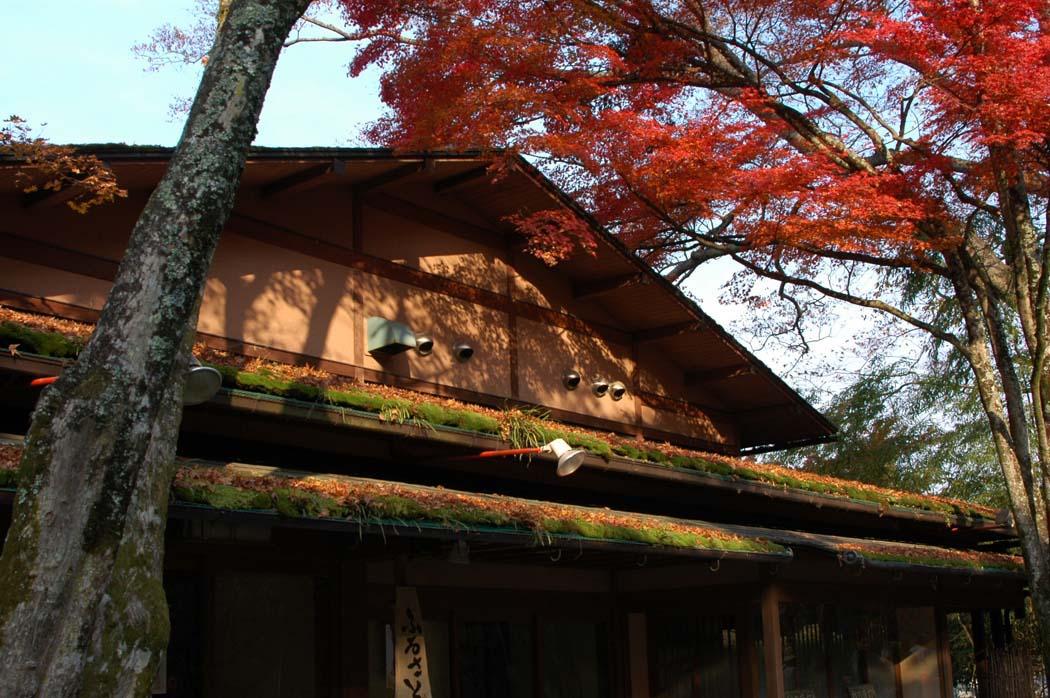 秋は、お寺で紅葉とお抹茶を!大原の里編