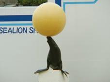 頭の上をアザラシが泳ぐ「しながわ水族館」