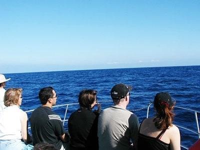 ハワイの冬場最大のお楽しみは、ホエールウォッチング!