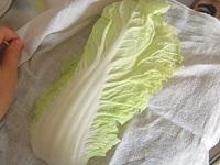 白菜の水気を拭き取る